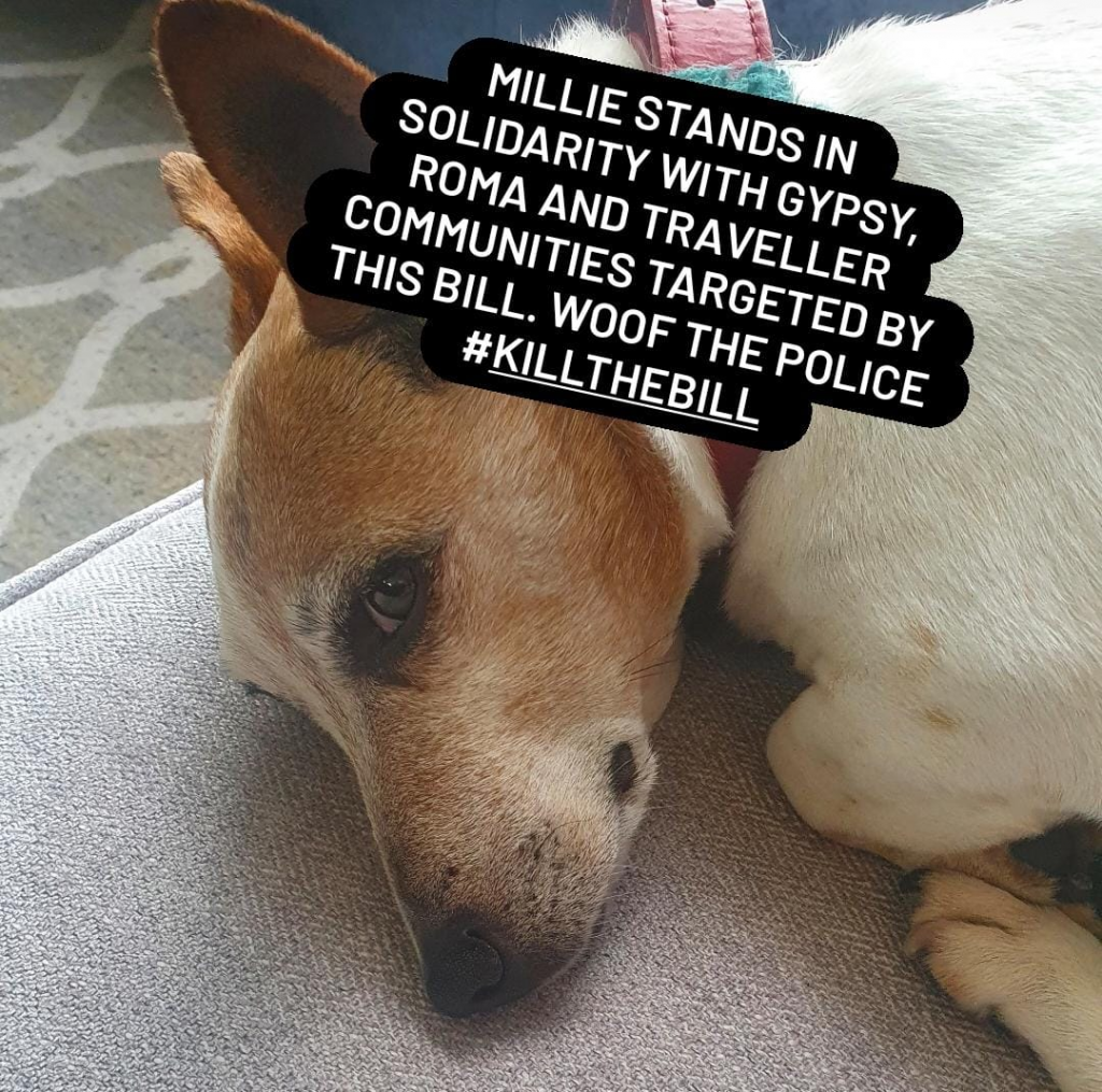 """Image of dog with text """"Millie stands in solidarity with Gypsy, Roma and traveller communities targeted by the Bill. Woof the police. #KillTheBill"""
