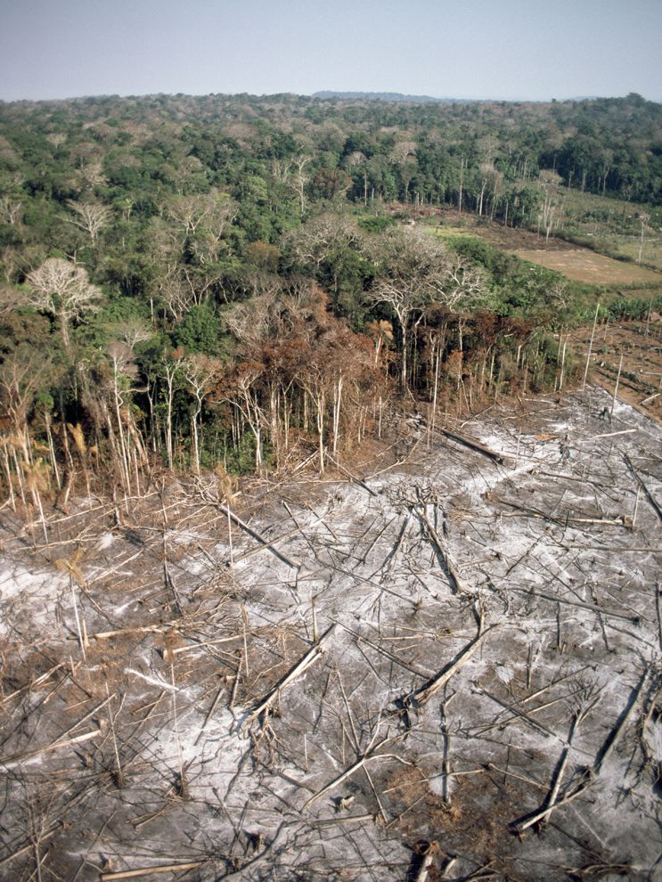 Clear-Cutting in Brazil   National Geographic Society